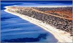 Shark Bay Shells
