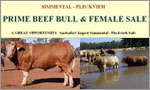 Prime Beef Bull & Female Sale