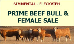 SIMMENTAL - FLECKVIEH