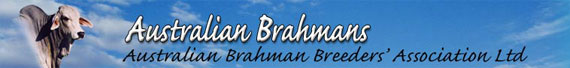 Australian Brahmans