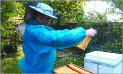 Big buzz about bees: More young people turn to backyard beekeeping