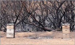 Bushfires, drought affecting more than half of South Australia's farmers.