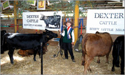 Dexters Give Kids a Great Start In The Cattle Industry
