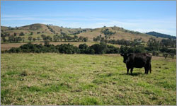 Dungog Township