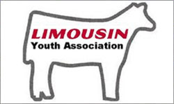 National Limousin Junior Show