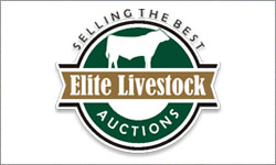 Elite Livestock Auctions