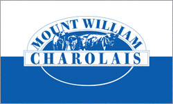 Mount William Charolais