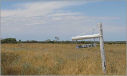 Outback Property Willowie Sells