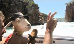 Gary The Goat's Journey