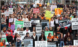 How animal activists took on the cattle industry and won