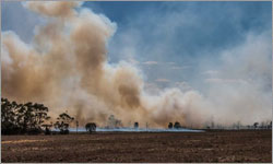 Farmers devastated by loss of livestock and livelihoods in Victorian bushfires