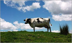 What would a new mandatory code of conduct in the dairy industry look like?