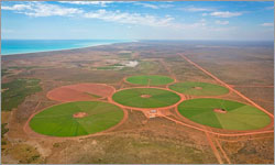 Wastewater from Pilbara explosives production used to fertilise cattle station's pastures