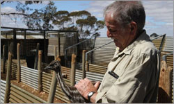 Drought hits emu farmers, as egg production halved in the big dry