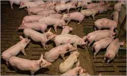 Ag Minister labels national farm map an 'attack list' for animal activists, but not illegal