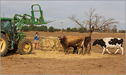 Last day for a Deniliquin dairy in southern NSW as drought forces farmers out