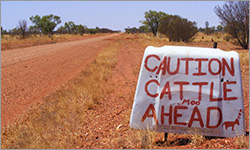 Long road ahead before Budget delivers $500m of bitumen to NT cattle producers