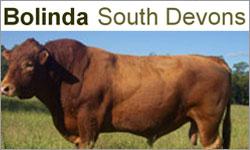 Bolinda South Devons