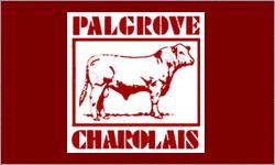Palgrove Charolais